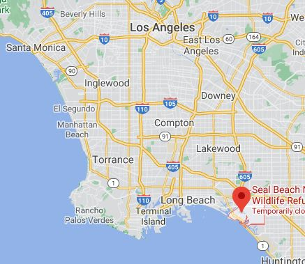 Campsite Review Seal Beach Campground