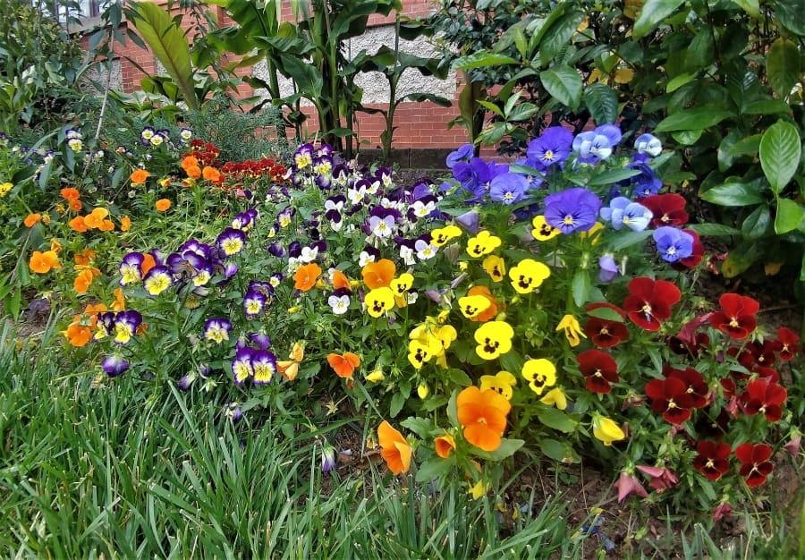 Flower garden at the Biltmore Conservatory.