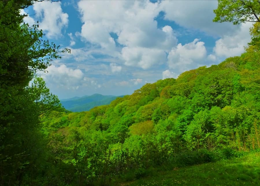 Forest vista in the Smoky Mountains